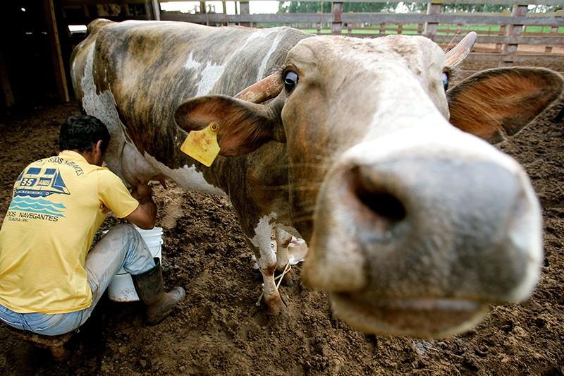 Запрет на импорт еды стимулировал рост промпроизводства в сентябре