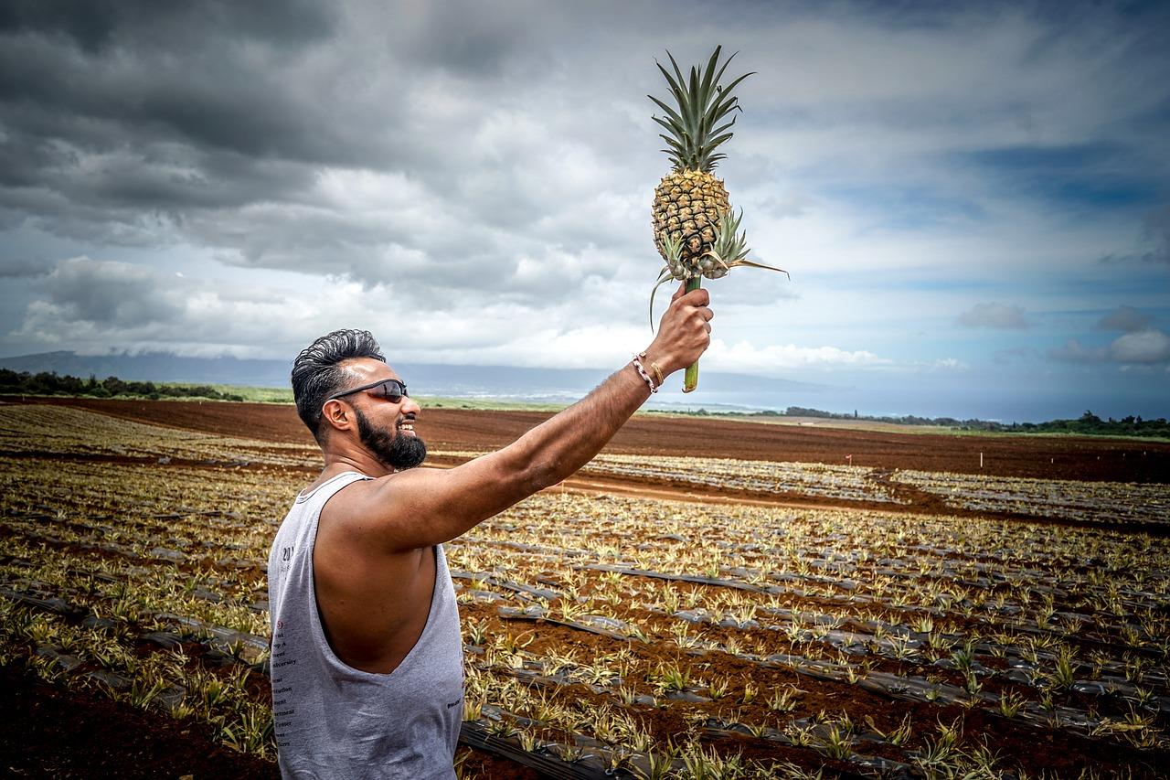 вырастить ананас.jpg