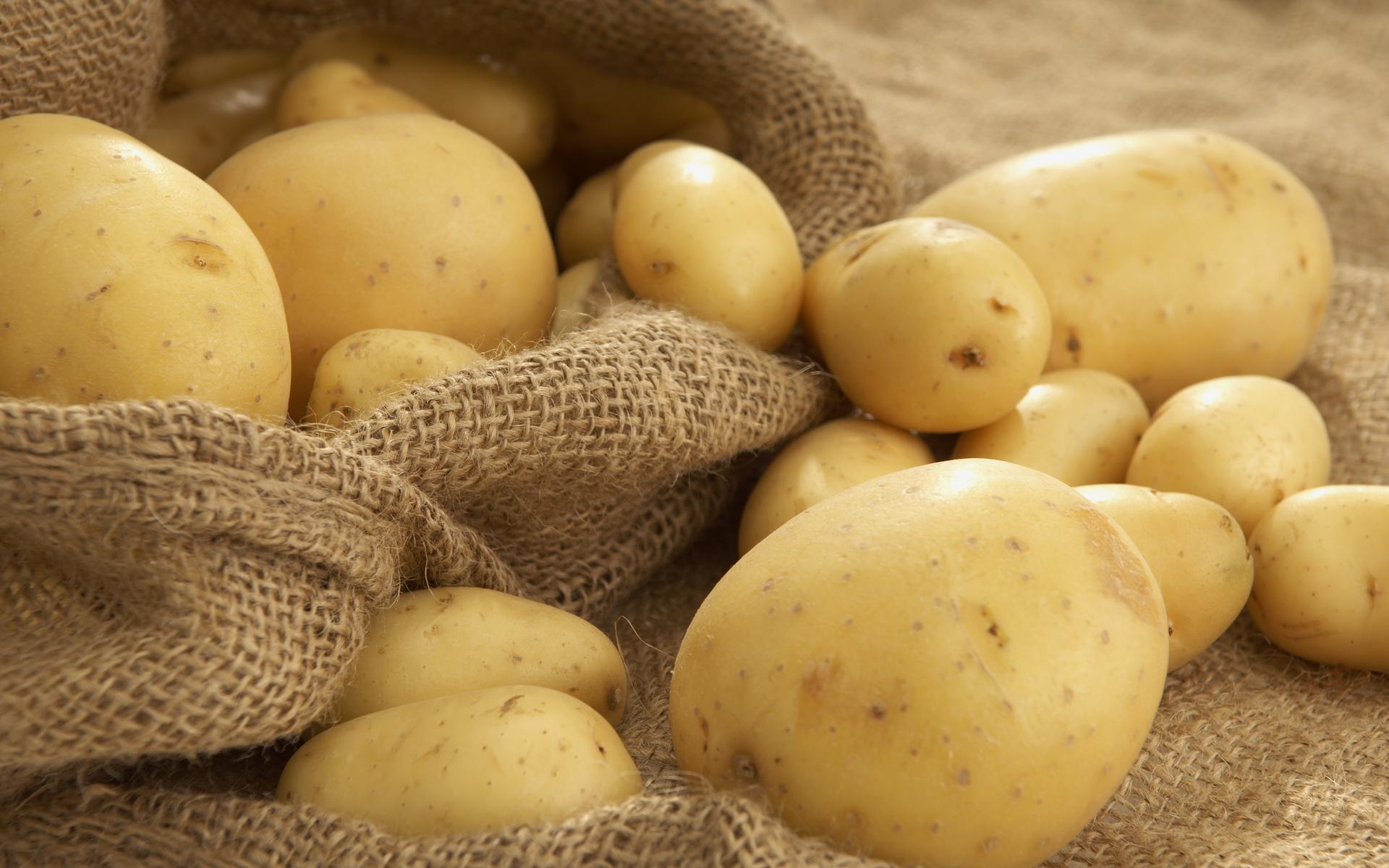 Счетная палата сказала о понижении уровня самообеспеченности Российской Федерации картофелем